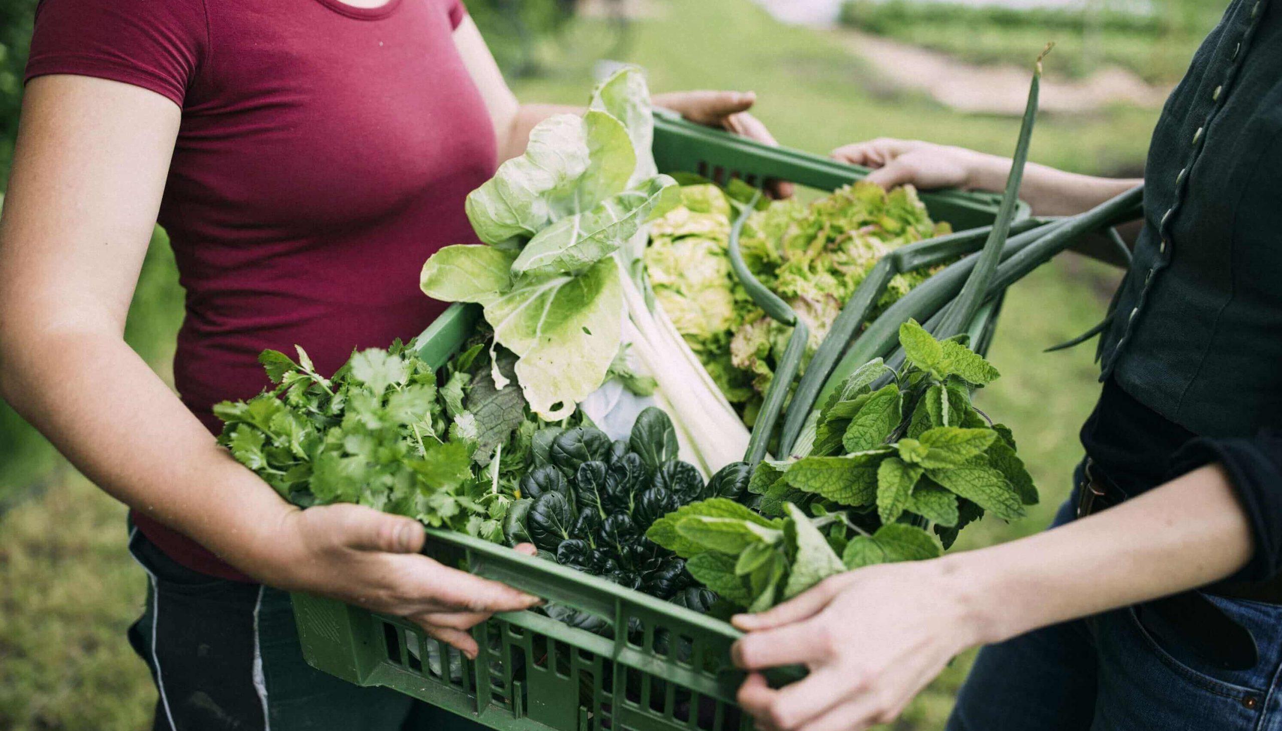 Selbstversorgung mit Gemüse, Kräutern und Früchten