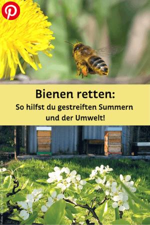 Biene mit Blüte und Bienenstöcke