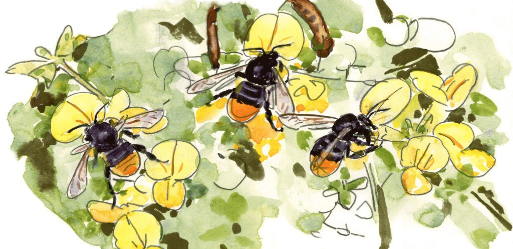 Fleißige Bienchen: Sie sorgen für unser Überleben