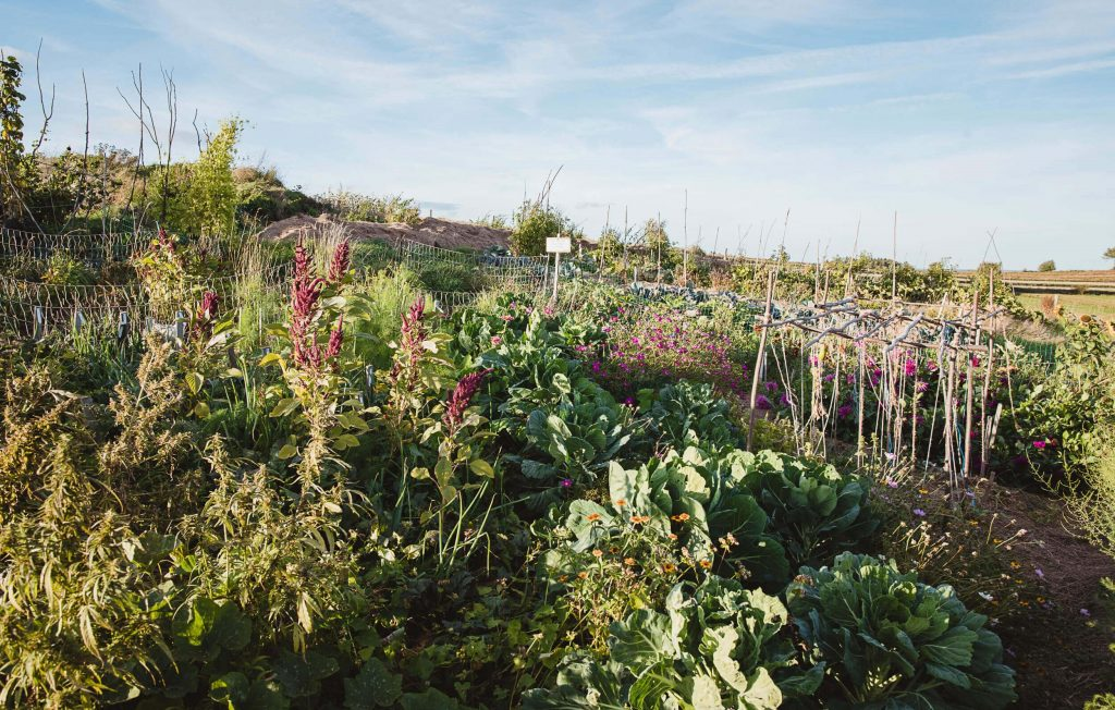 Pflanzen aus samenfestem Saatgut sind resistent und standortangepasst