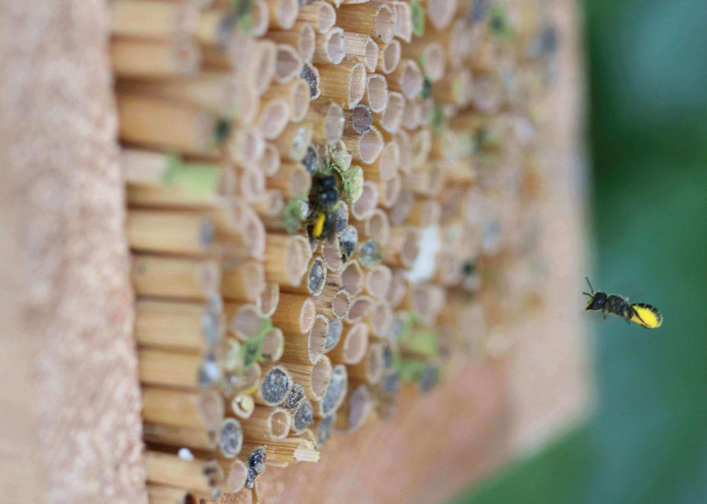 Ab durch die Luke, liebe Biene