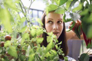 Eine junge Frau schaut zwischen Gemüsepflanzen durch