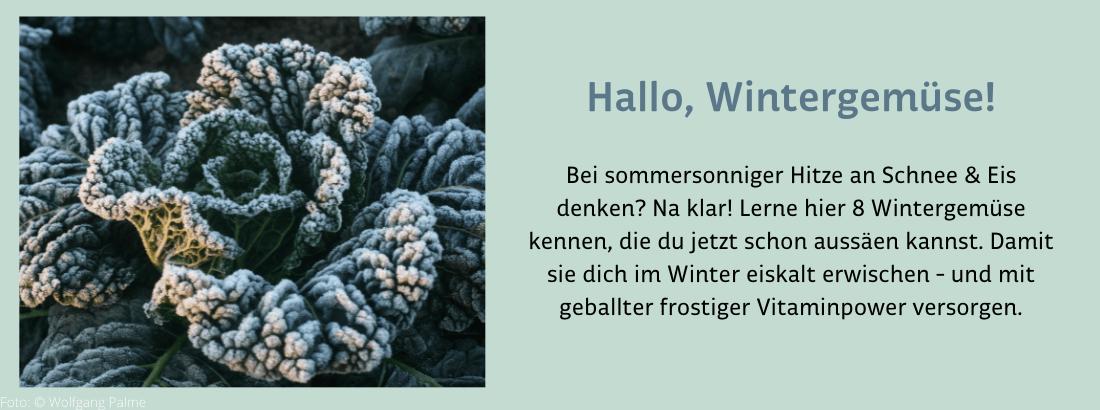 Damit es im Winter nicht nur im Ofen, sondern auch unter der Schneedecke knistert: Jetzt Wintergemüse aussäen.