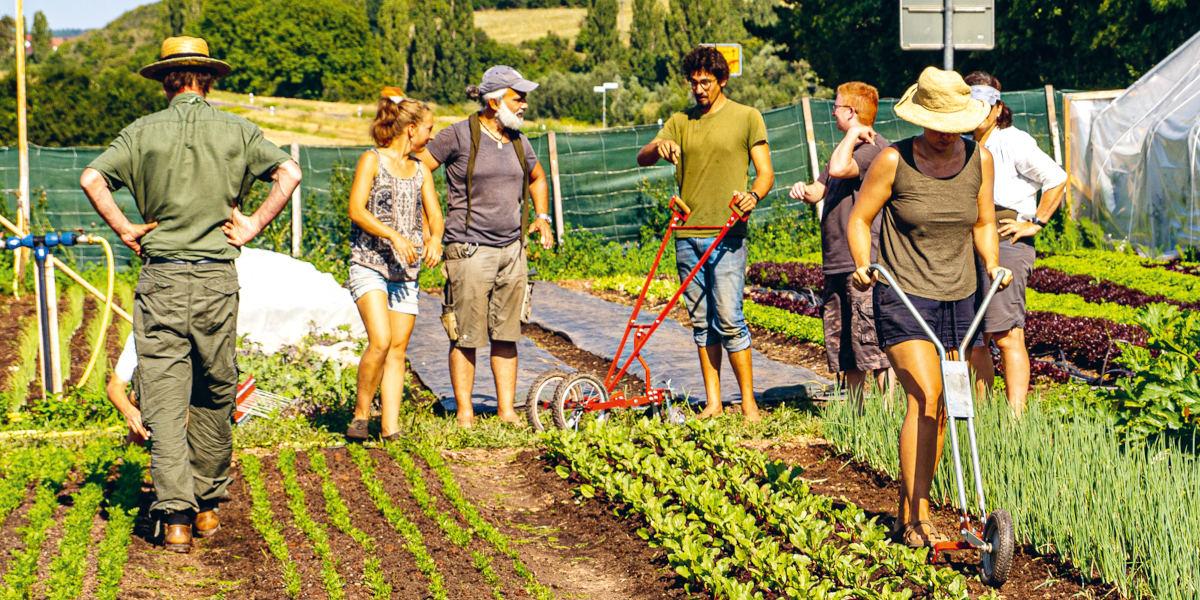 Eine Gruppe von Menschen auf dem Feld beim Market Gardening