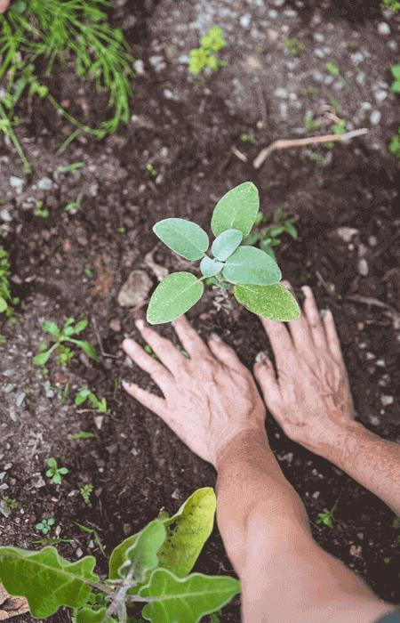Hände, die die Erde einer Pflanze festdrücken