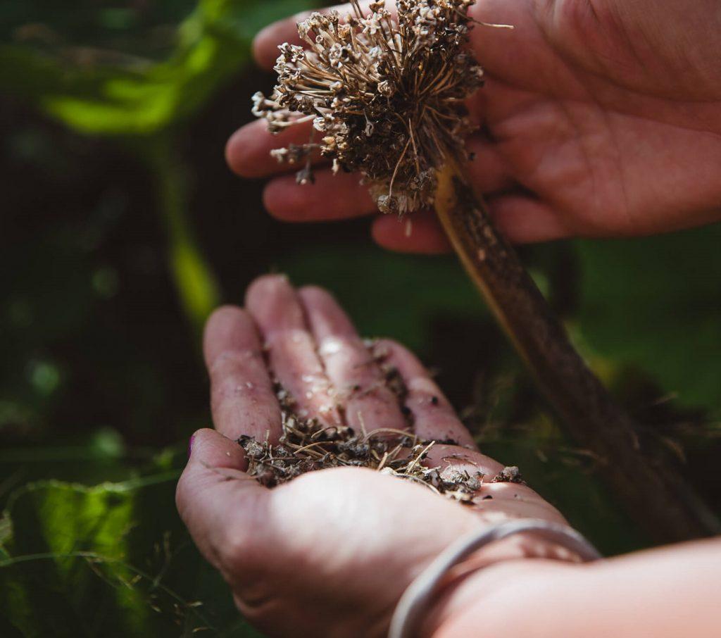 geerntetes Saatgut auf Hand